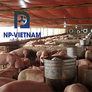 thông gió trang trại lợn